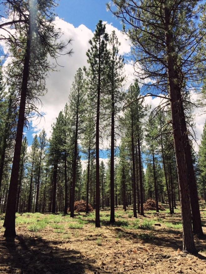 bend oregon forest