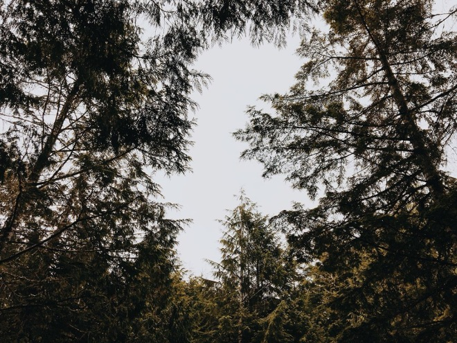 oregon forests